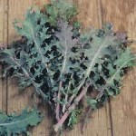 kale red