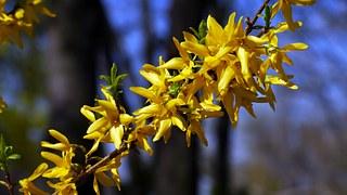 spring-flowers pix