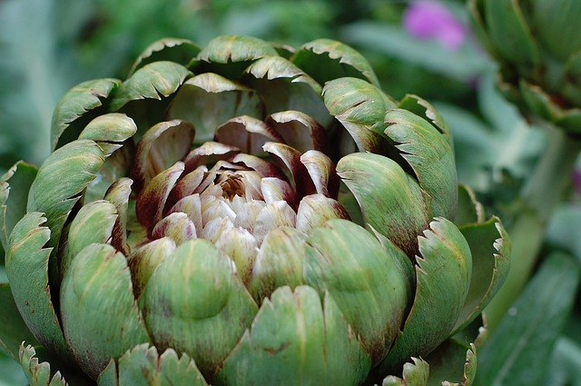 3 reasons to Add enchanting artichokes to your diet